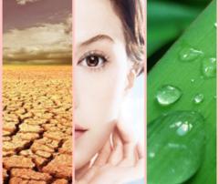 hydrate skin