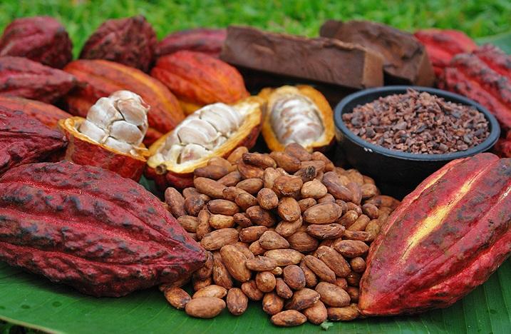 cacao powder health benefits