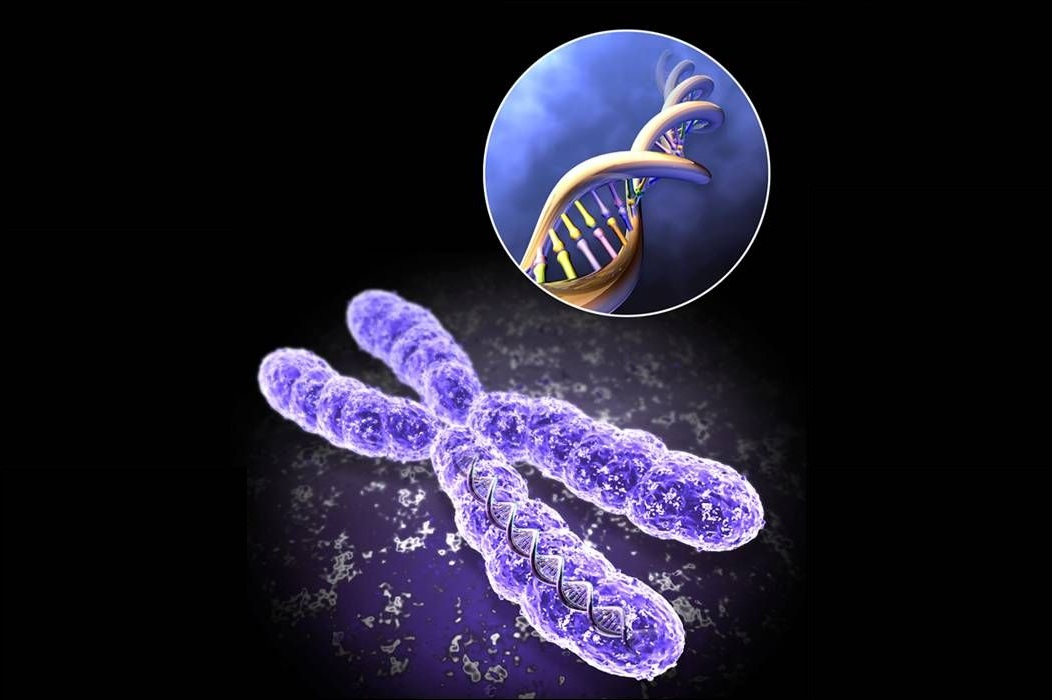 the secret to staying young - telomeres