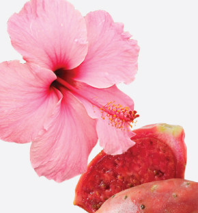 Hibiscus benefits for skin care